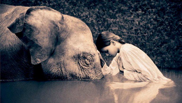 la-compassione-770x439_c
